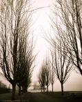 Styer_02_Fog at Thea's Park