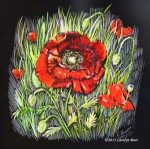 Burt_Poppies (scratchboard) 6by6_185
