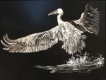 Burt_TakingFlight(scratchboard)24by30_500