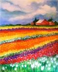 Tulip-Fields