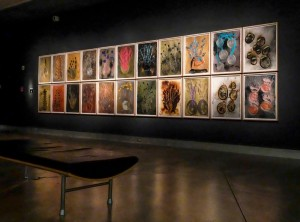From the Chihuly Drawings exhibition at the Museum of Glass. Photo by Dane Gregory Meyer.