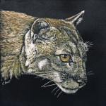 burt_cougar-8-x8