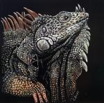 burt_papa-iguana